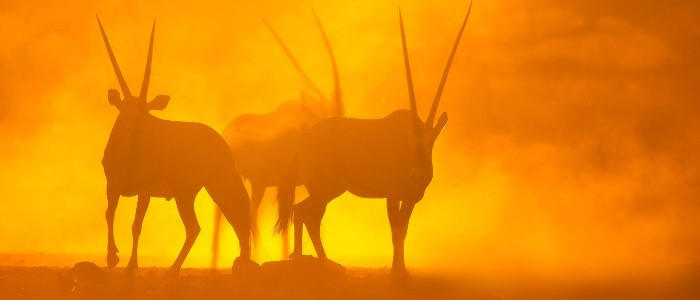 Oryx-on-Fire
