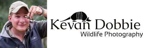 Kevan Dobbie Logo and profile picture